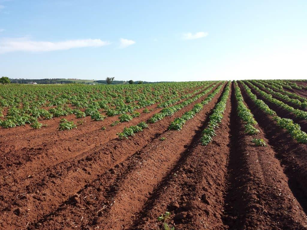 انواع التربة الزراعية