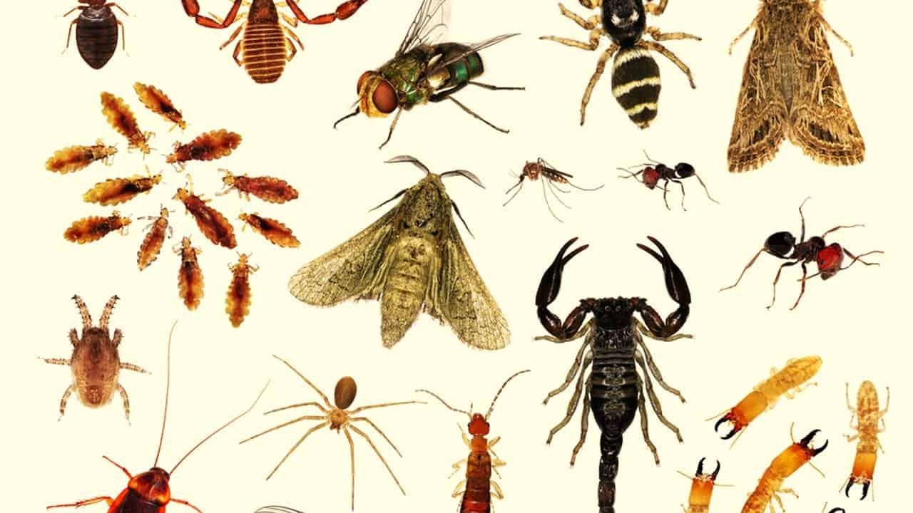 اجزاء فم الحشرات
