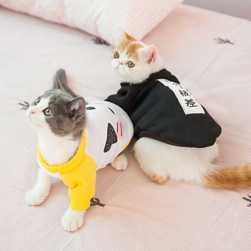 اماكن لايداع القطط